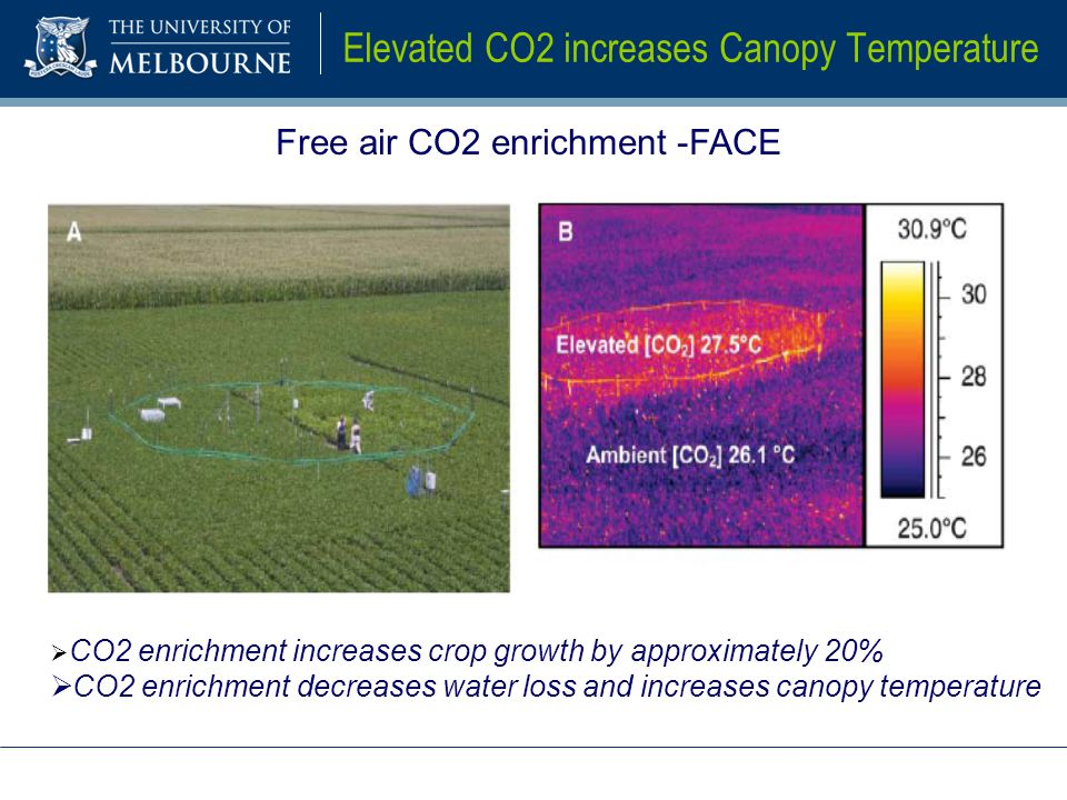 Elevated CO2 increases Canopy Temperature Free air CO2 enrichment -FACE  CO2 enrichment increases crop growth by approximately 20%  CO2 enrichment decreases water loss and increases canopy temperature