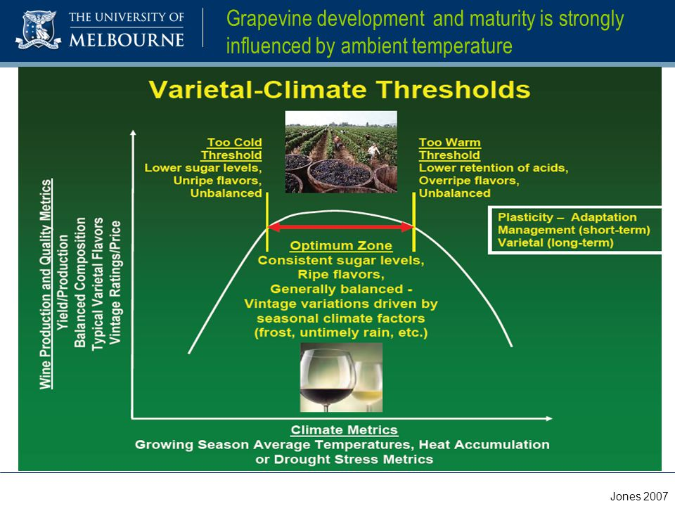 Grapevine development and maturity is strongly influenced by ambient temperature Jones 2007