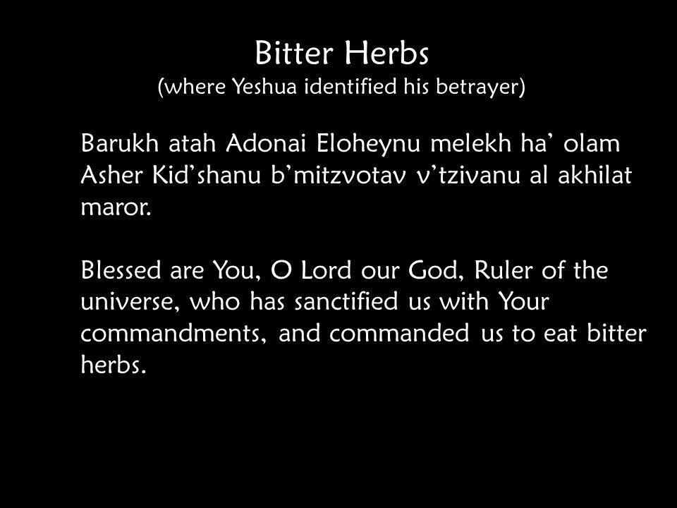 Bitter Herbs (where Yeshua identified his betrayer) Barukh atah Adonai Eloheynu melekh ha' olam Asher Kid'shanu b'mitzvotav v'tzivanu al akhilat maror.