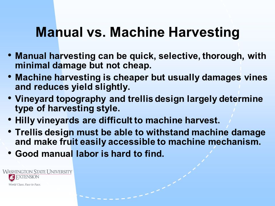 Manual vs. Machine Harvesting Manual harvesting can be quick, selective, thorough, with minimal damage but not cheap. Machine harvesting is cheaper bu