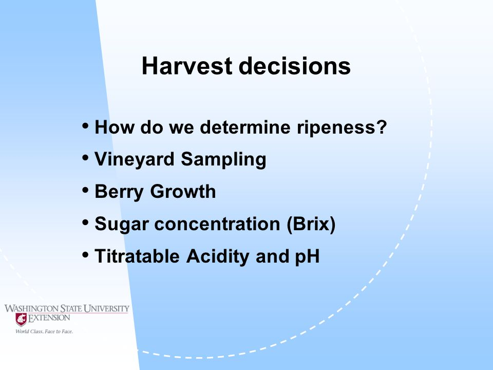 Vineyard Sampling Sample must represent entire vineyard (changes in topography, soil, etc.) Everything must be chosen randomly  I.E.