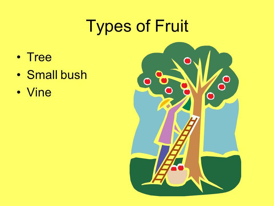 Types of Fruit Tree Small bush Vine