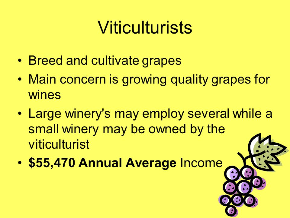Viticulturists Breed and cultivate grapes Main concern is growing quality grapes for wines Large winery s may employ several while a small winery may be owned by the viticulturist $55,470 Annual Average Income