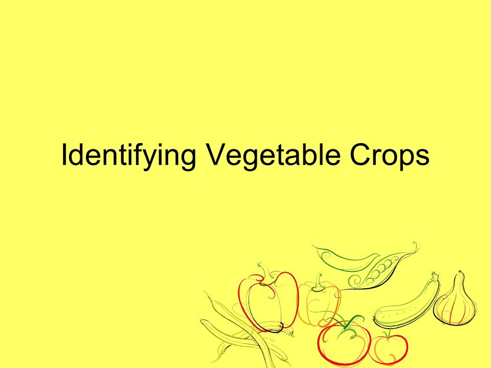Identifying Vegetable Crops