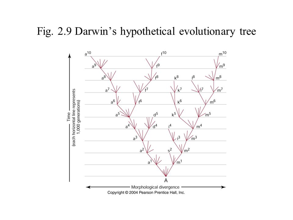 Fig. 2.9 Darwin's hypothetical evolutionary tree