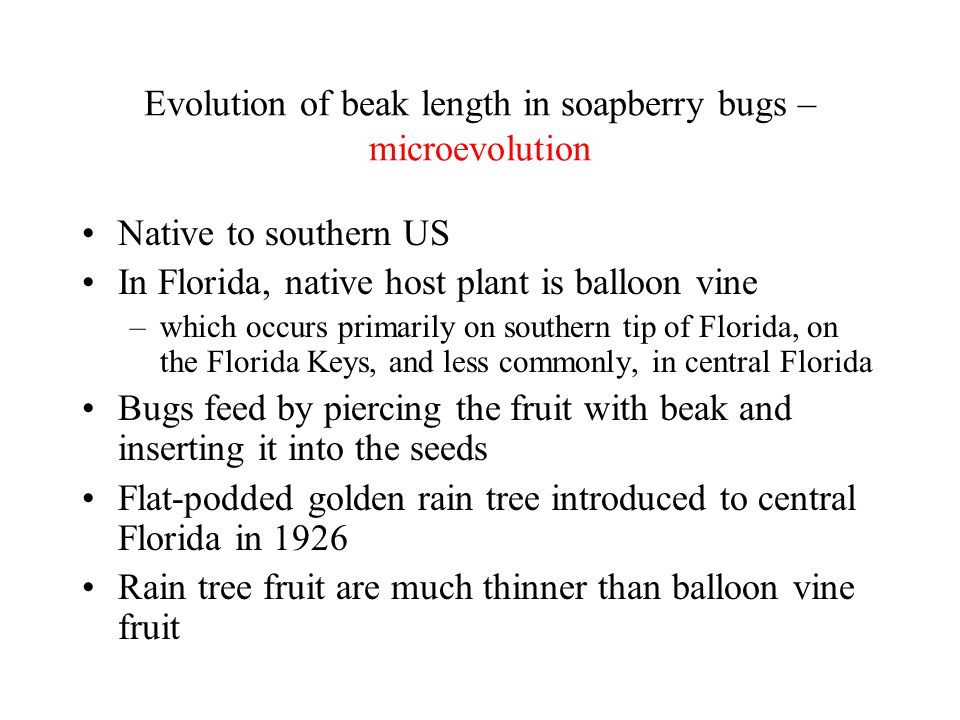 Evolution of beak length in soapberry bugs – microevolution Native to southern US In Florida, native host plant is balloon vine –which occurs primaril