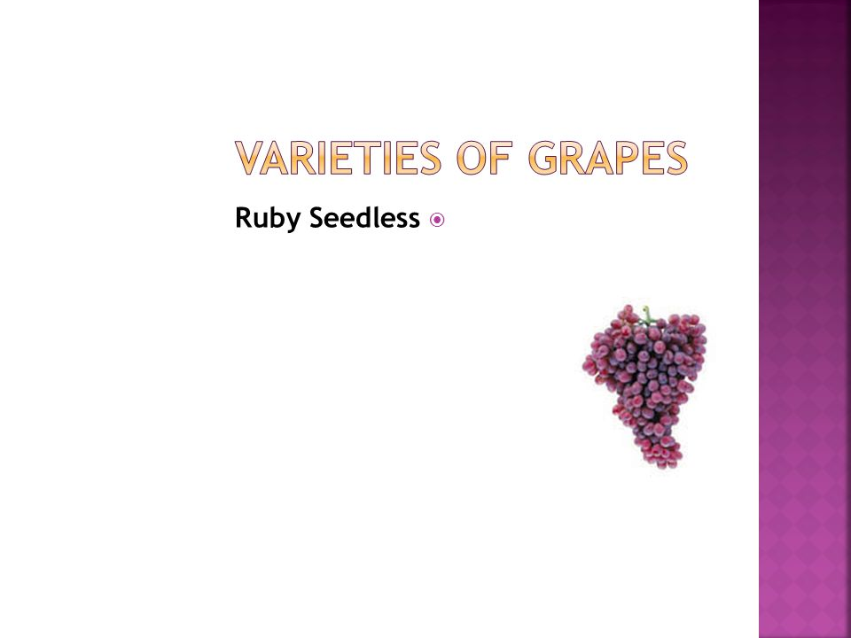  Ruby Seedless