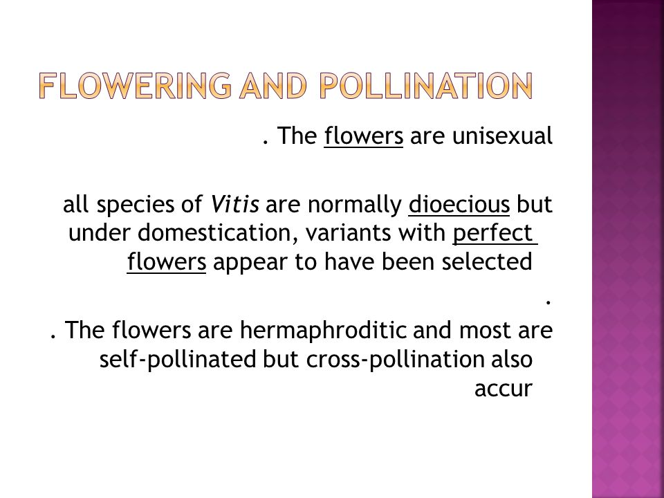The flowers are unisexual all species of Vitis are normally dioecious but under domestication, variants with perfect flowers appear to have been selected..