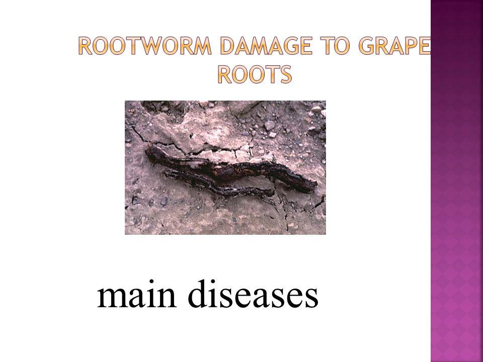 main diseases