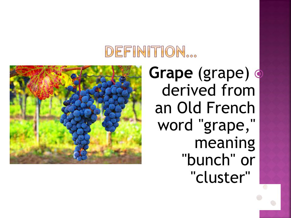  Grape (grape) derived from an Old French word grape, meaning bunch or cluster