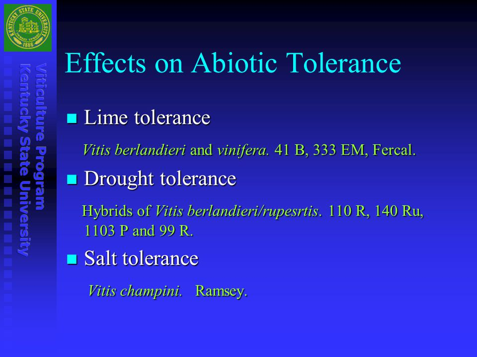 Effects on Abiotic Tolerance Lime tolerance Lime tolerance Vitis berlandieri and vinifera. 41 B, 333 EM, Fercal. Vitis berlandieri and vinifera. 41 B,