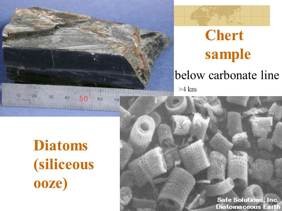 Chert sample Diatoms (siliceous ooze) below carbonate line >4 km
