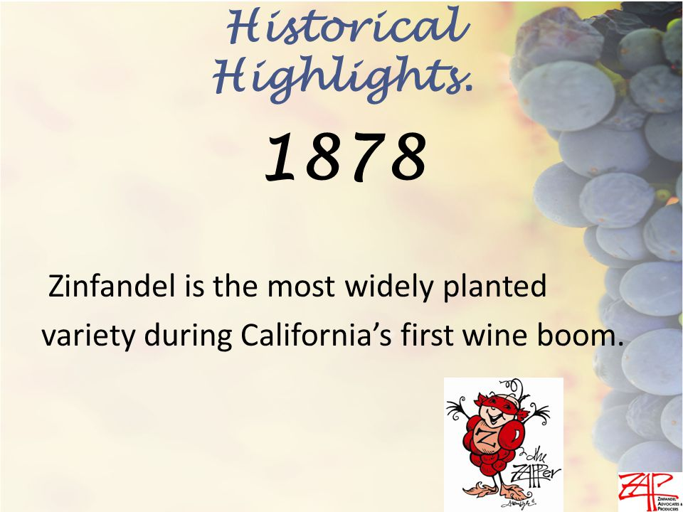 Zinfandel is the most widely planted variety during California's first wine boom.