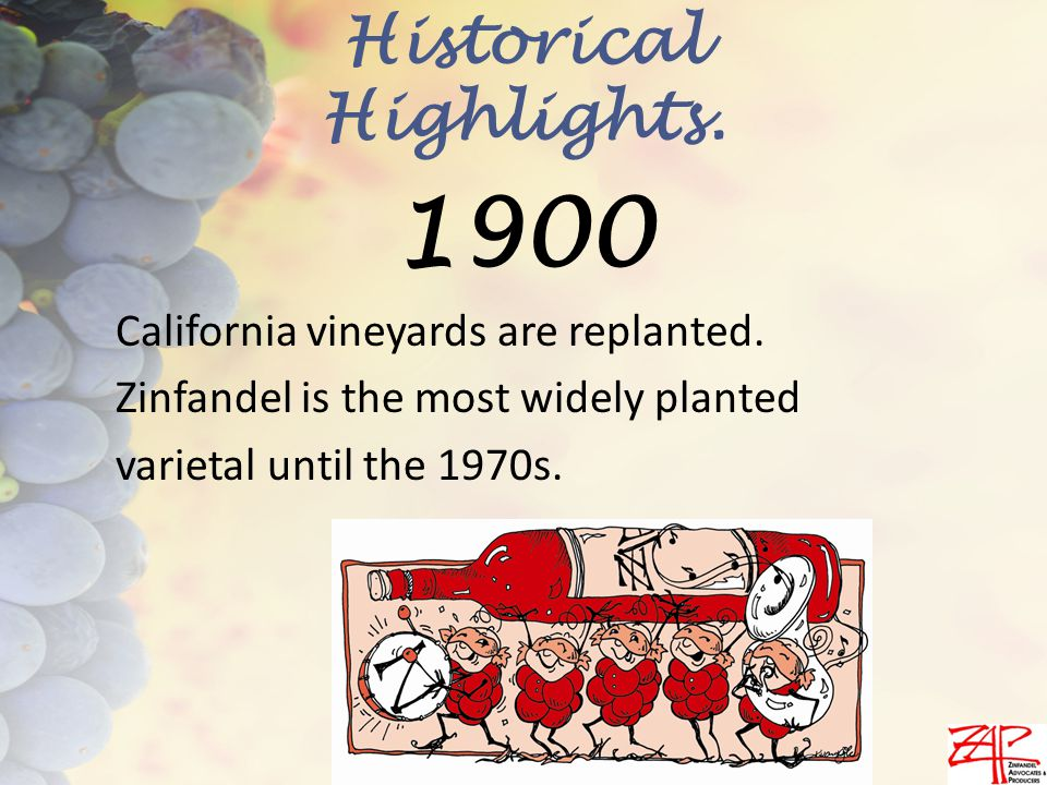 California vineyards are replanted.Zinfandel is the most widely planted varietal until the 1970s.