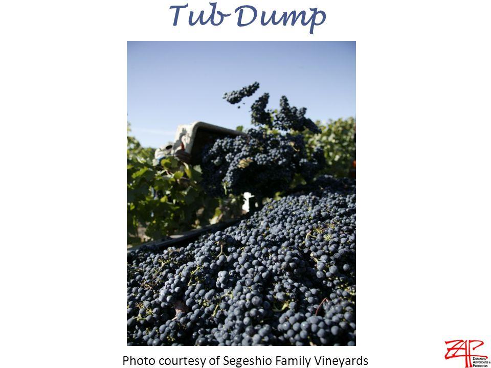 Tub Dump Photo courtesy of Segeshio Family Vineyards