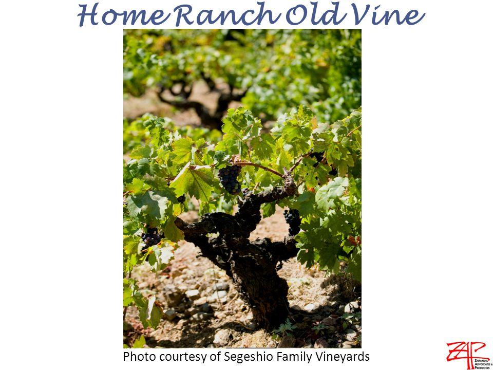 Home Ranch Old Vine Photo courtesy of Segeshio Family Vineyards