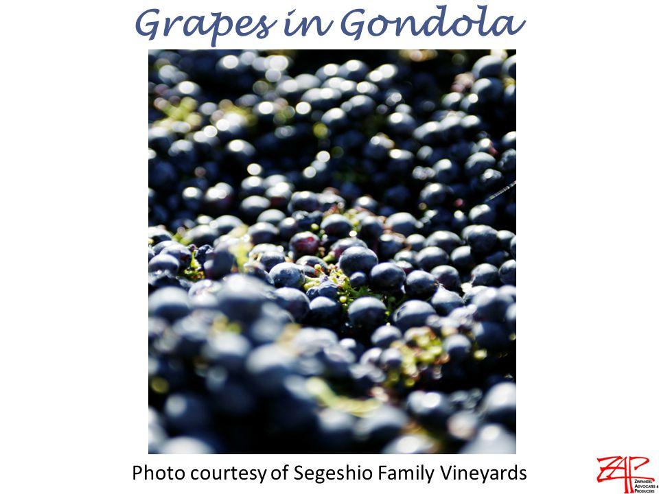 Grapes in Gondola Photo courtesy of Segeshio Family Vineyards