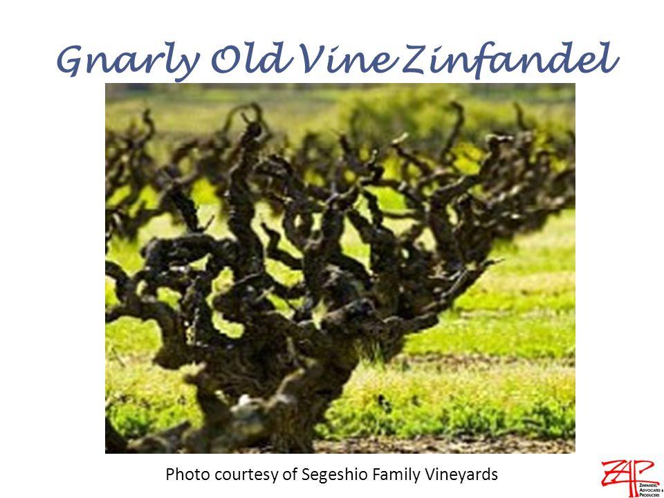 Gnarly Old Vine Zinfandel Photo courtesy of Segeshio Family Vineyards