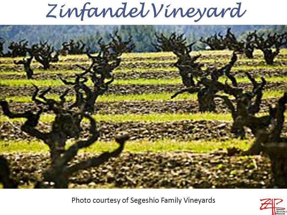 Zinfandel Vineyard Photo courtesy of Segeshio Family Vineyards
