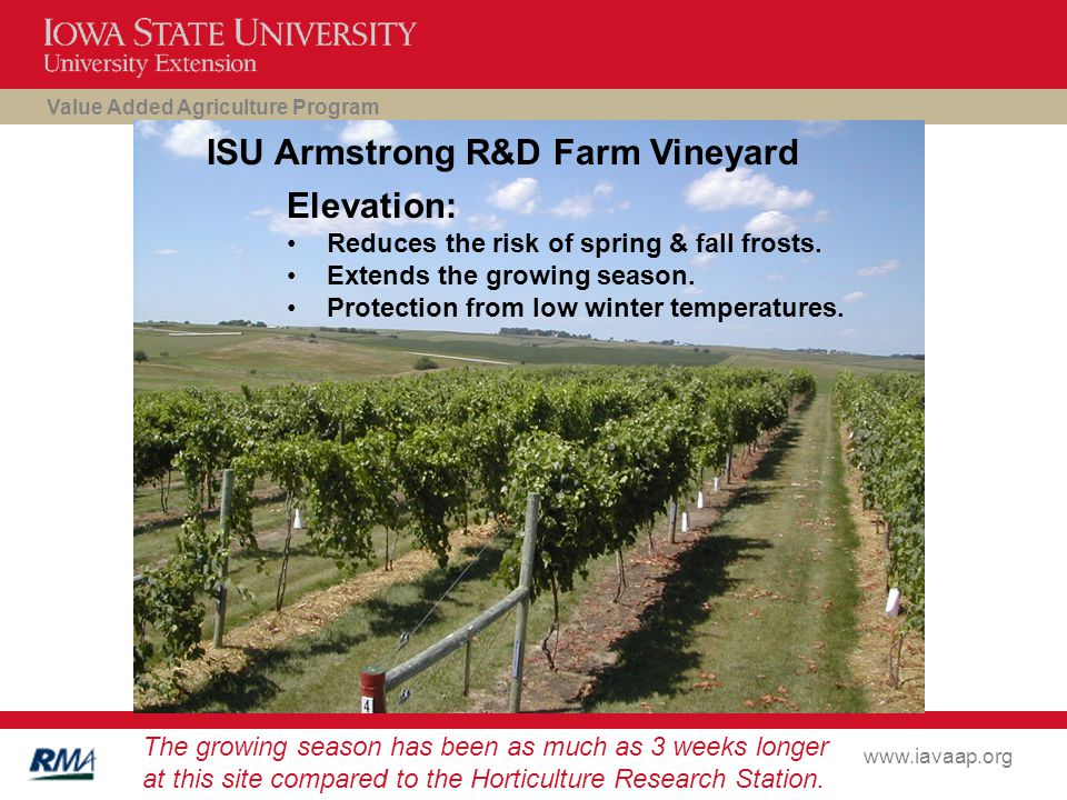 Value Added Agriculture Program www.iavaap.org ISU Armstrong R&D Farm Vineyard Elevation: Reduces the risk of spring & fall frosts.