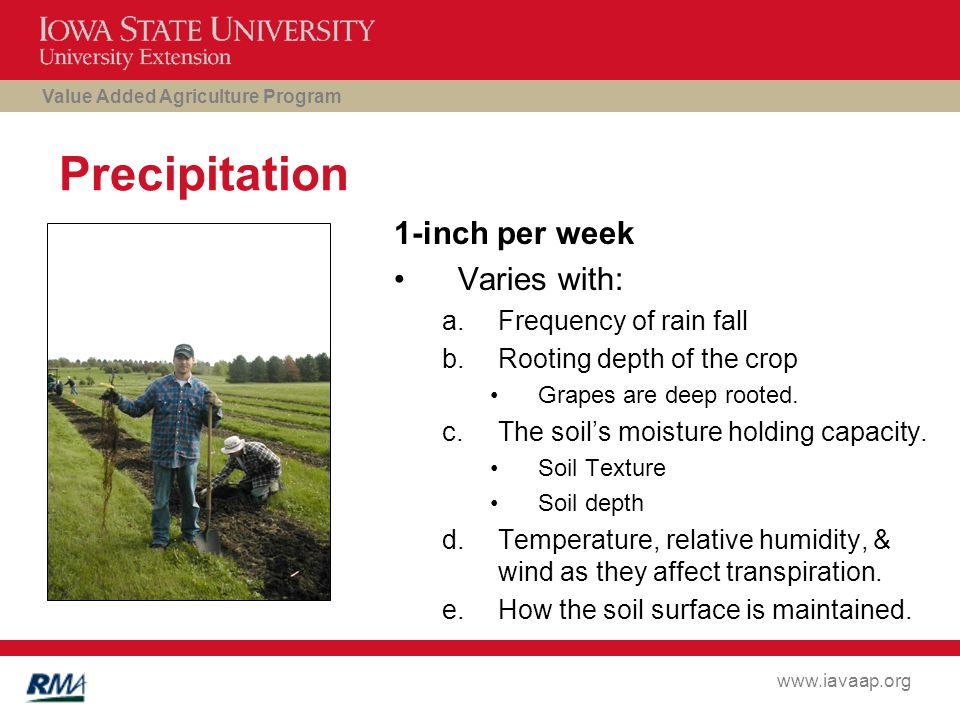 Value Added Agriculture Program www.iavaap.org Precipitation 1-inch per week Varies with: a.Frequency of rain fall b.Rooting depth of the crop Grapes are deep rooted.