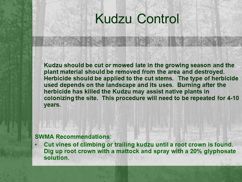Kudzu Control Kudzu should be cut or mowed late in the growing season and the plant material should be removed from the area and destroyed. Herbicide