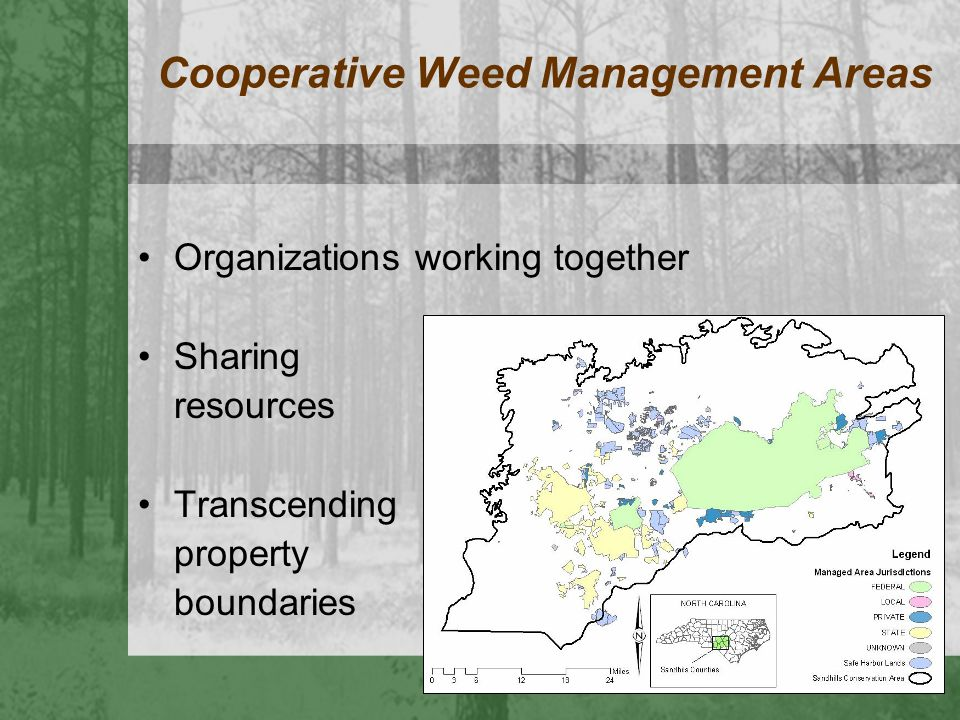 Cooperative Weed Management Areas Organizations working together Sharing resources Transcending property boundaries