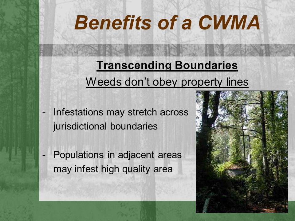 Benefits of a CWMA Transcending Boundaries Weeds don't obey property lines -Infestations may stretch across jurisdictional boundaries -Populations in
