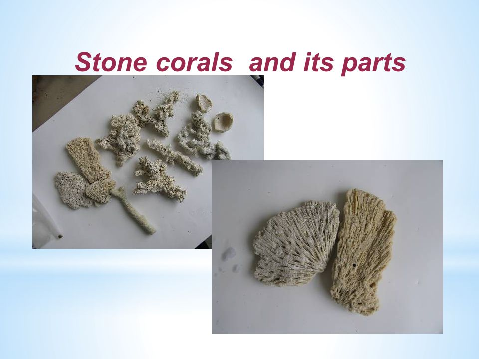 Stone corals and its parts