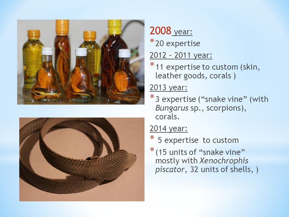 """2008 year: * 20 expertise 2012 – 2011 year: * 11 expertise to custom (skin, leather goods, corals ) 2013 year: * 3 expertise (""""snake vine"""" (with Bunga"""