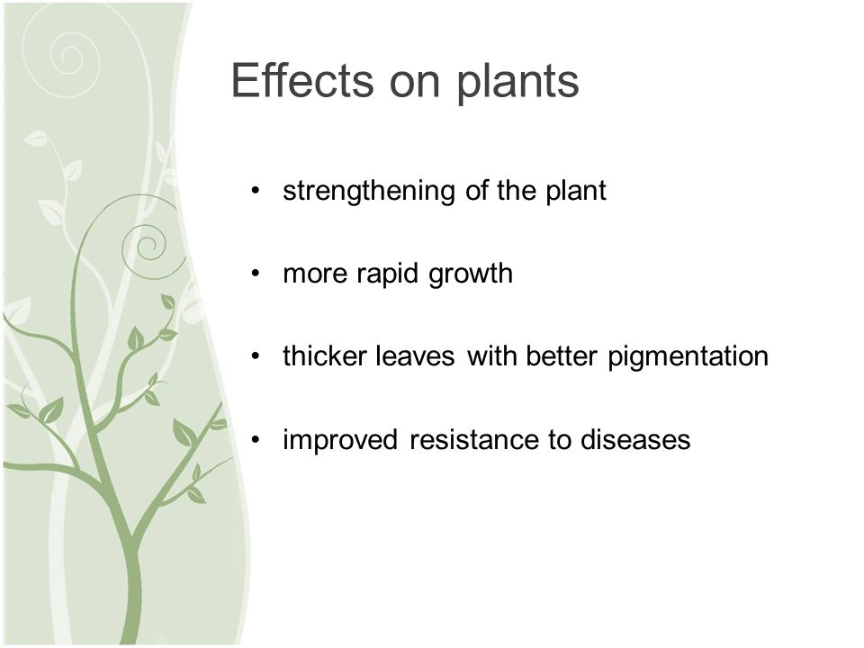 strengthening of the plant more rapid growth thicker leaves with better pigmentation improved resistance to diseases Effects on plants