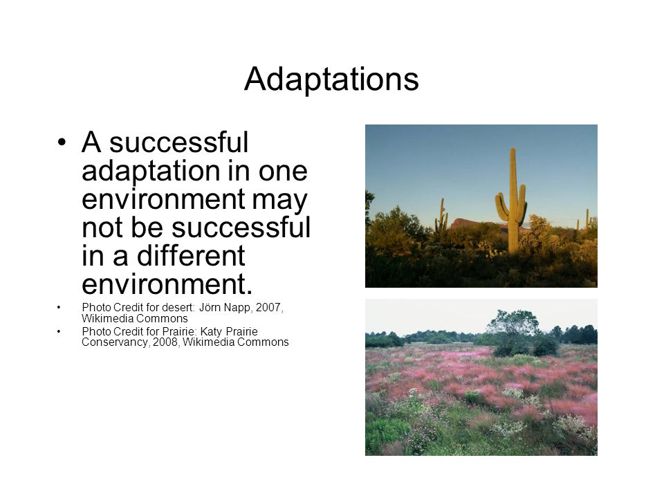 Adaptations A successful adaptation in one environment may not be successful in a different environment.