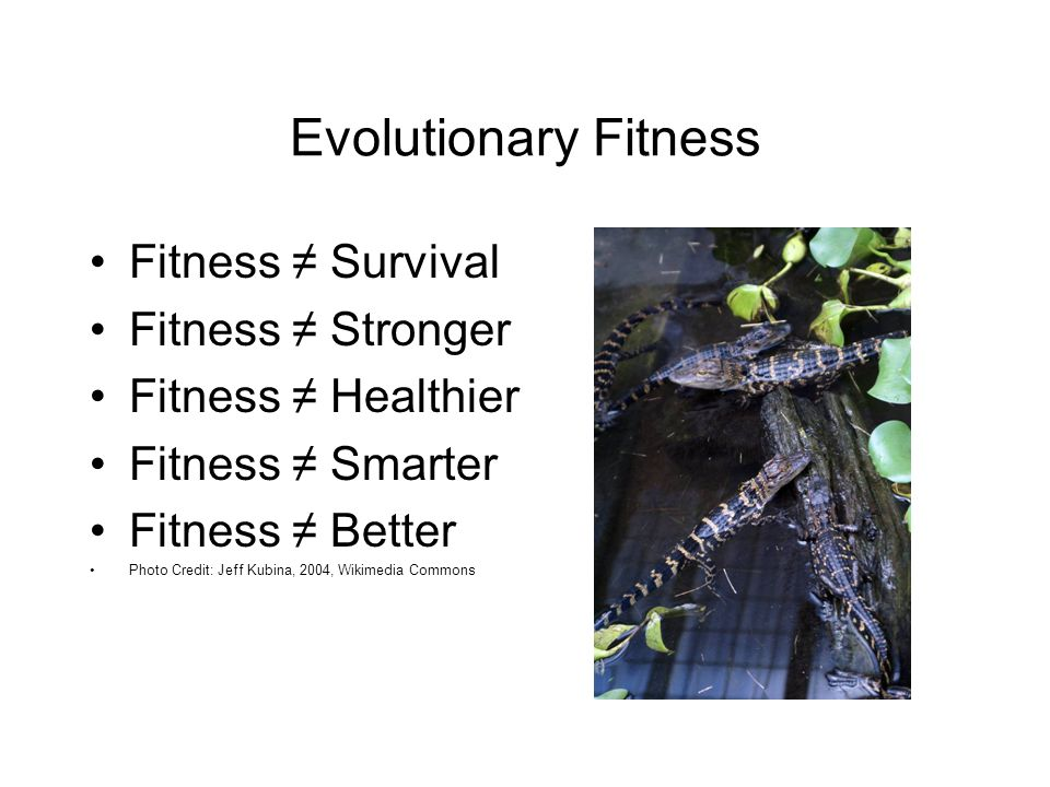 Evolutionary Fitness Fitness ≠ Survival Fitness ≠ Stronger Fitness ≠ Healthier Fitness ≠ Smarter Fitness ≠ Better Photo Credit: Jeff Kubina, 2004, Wikimedia Commons