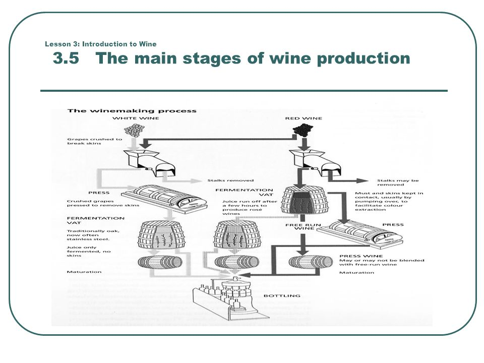 Lesson 3: Introduction to Wine 3.5 The main stages of wine production