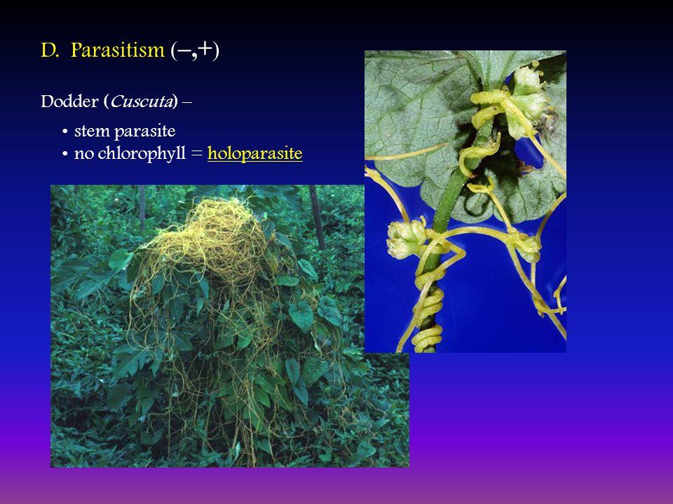 D. Parasitism ( –,+ ) Dodder (Cuscuta) – stem parasite no chlorophyll = holoparasite