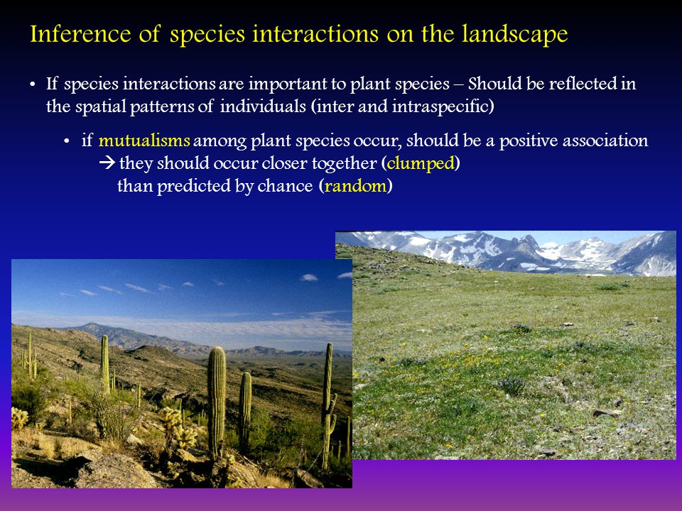 Inference of species interactions on the landscape If species interactions are important to plant species – Should be reflected in the spatial patterns of individuals (inter and intraspecific) if mutualisms among plant species occur, should be a positive association  they should occur closer together (clumped) than predicted by chance (random)