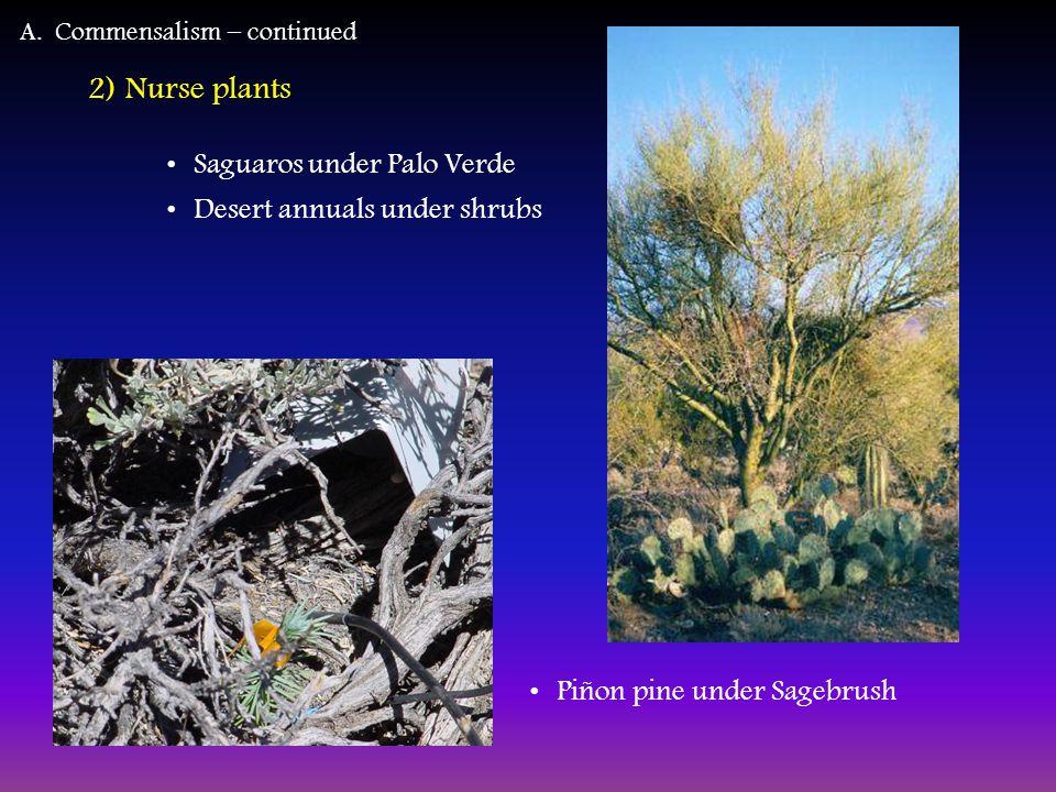 2) Nurse plants Saguaros under Palo Verde Desert annuals under shrubs A.