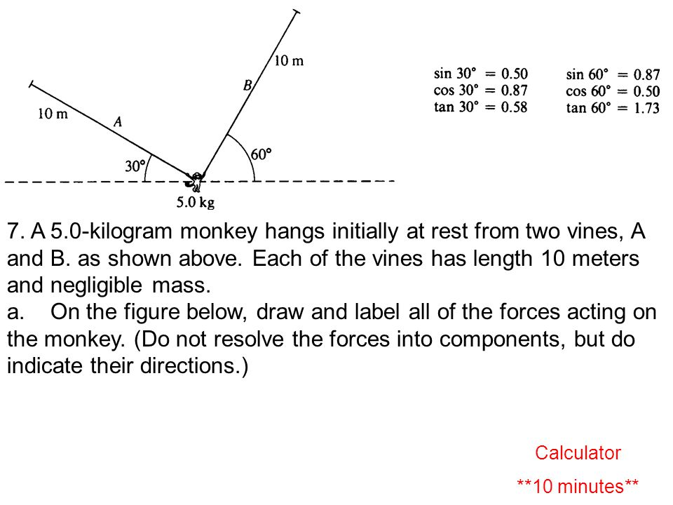 7. A 5.0 ‑ kilogram monkey hangs initially at rest from two vines, A and B.