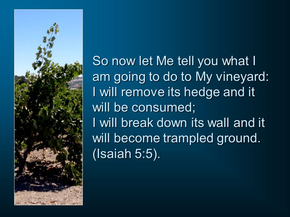 So now let Me tell you what I am going to do to My vineyard: I will remove its hedge and it will be consumed; I will break down its wall and it will b