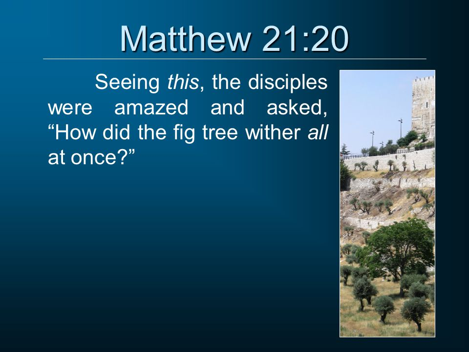 """Matthew 21:20 Seeing this, the disciples were amazed and asked, """"How did the fig tree wither all at once?"""""""