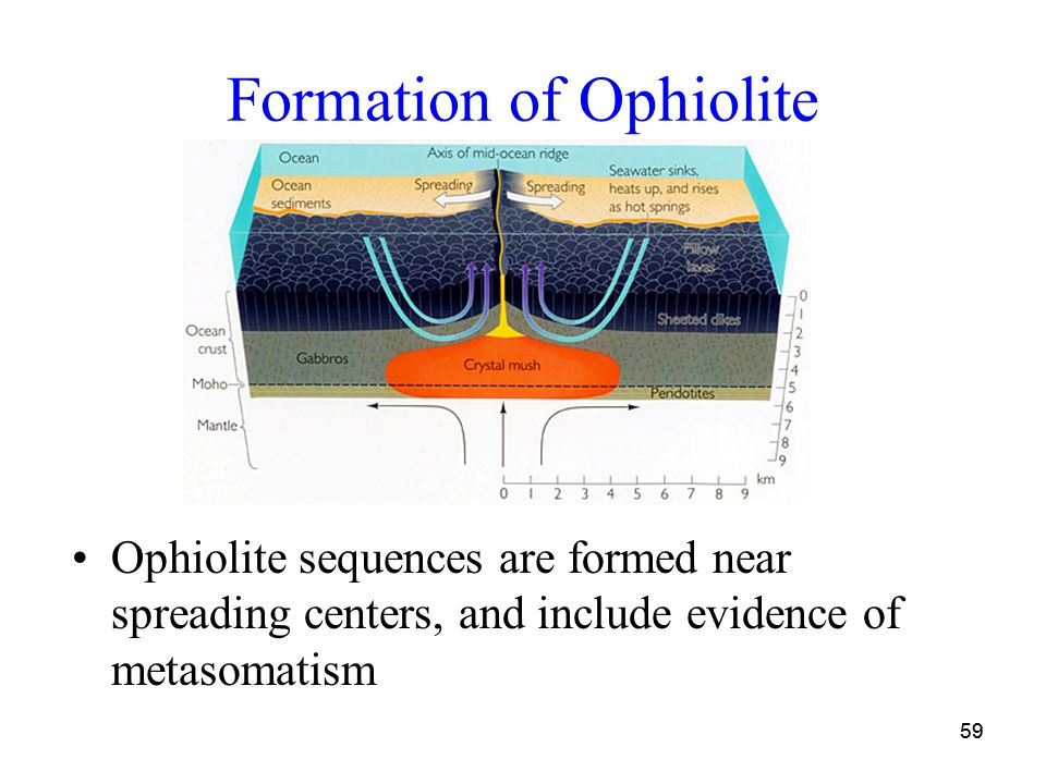 59 Formation of Ophiolite Ophiolite sequences are formed near spreading centers, and include evidence of metasomatism 59