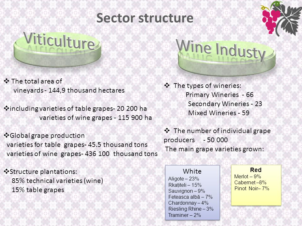 Sector structure  The total area of vineyards - 144,9 thousand hectares  including varieties of table grapes- 20 200 ha varieties of wine grapes - 115 900 ha  Global grape production varieties for table grapes- 45.5 thousand tons varieties of wine grapes- 436 100 thousand tons  Structure plantations: 85% technical varieties (wine) 15% table grapes  The types of wineries: Primary Wineries - 66 Secondary Wineries - 23 Mixed Wineries - 59  The number of individual grape producers - 50 000 The main grape varieties grown: White Aligote – 23% Rkaţiteli – 15% Sauvignon – 9% Feteasca albă – 7% Chardonnay – 4% Riesling Rhine – 3% Traminer – 2% White Aligote – 23% Rkaţiteli – 15% Sauvignon – 9% Feteasca albă – 7% Chardonnay – 4% Riesling Rhine – 3% Traminer – 2% Red Merlot – 9% Cabernet –8% Pinot Noir– 7% Red Merlot – 9% Cabernet –8% Pinot Noir– 7%