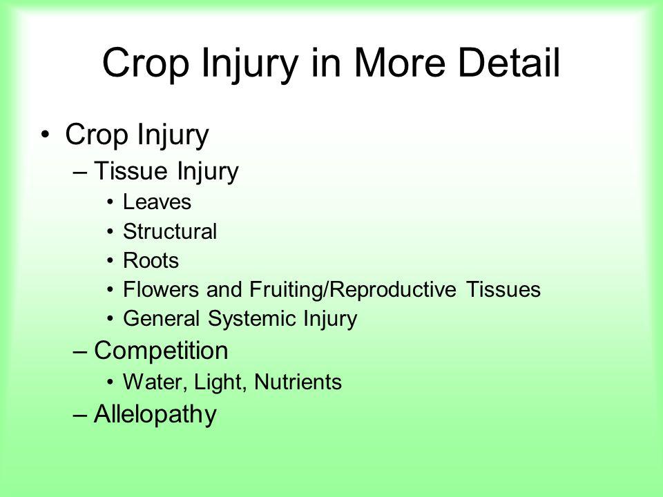 Crop Injury in More Detail Crop Injury –Tissue Injury Leaves Structural Roots Flowers and Fruiting/Reproductive Tissues General Systemic Injury –Compe