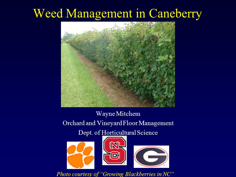 Weed Management in Caneberry Wayne Mitchem Orchard and Vineyard Floor Management Dept.