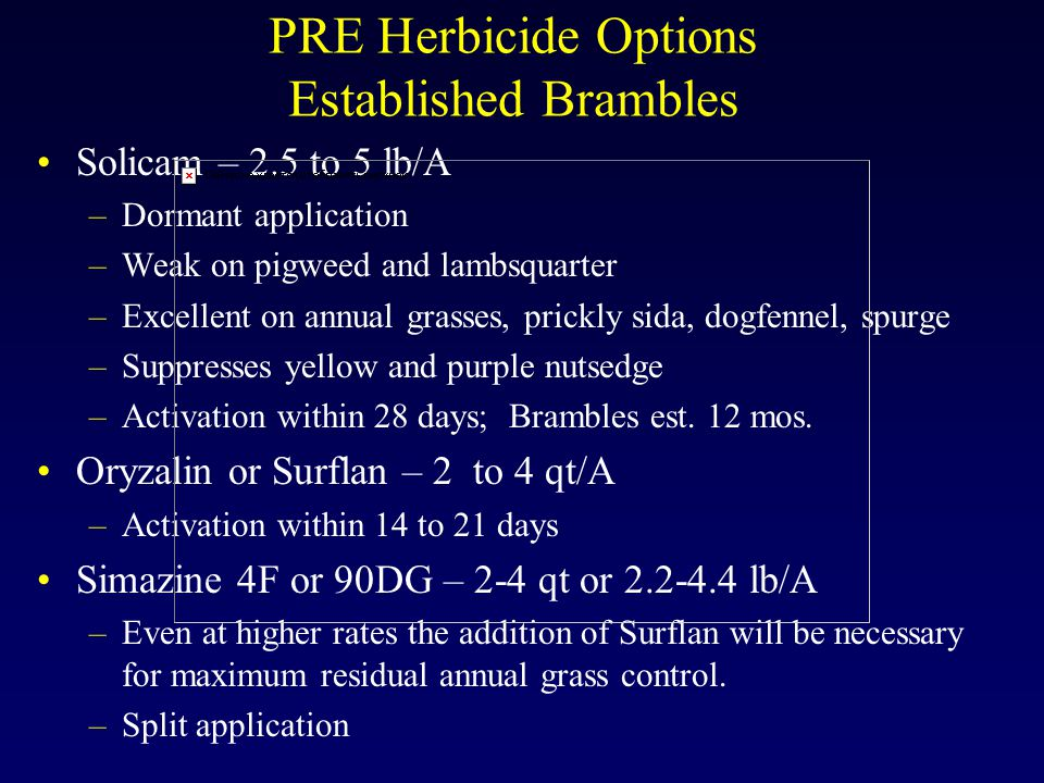 PRE Herbicide Options Established Brambles Solicam – 2.5 to 5 lb/A –Dormant application –Weak on pigweed and lambsquarter –Excellent on annual grasses, prickly sida, dogfennel, spurge –Suppresses yellow and purple nutsedge –Activation within 28 days; Brambles est.