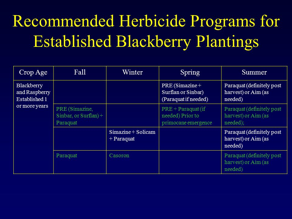 Recommended Herbicide Programs for Established Blackberry Plantings Crop AgeFallWinterSpringSummer Blackberry and Raspberry Established 1 or more years PRE (Simazine + Surflan or Sinbar) (Paraquat if needed) Paraquat (definitely post harvest) or Aim (as needed) PRE (Simazine, Sinbar, or Surflan) + Paraquat PRE + Paraquat (if needed) Prior to primocane emergence Paraquat (definitely post harvest) or Aim (as needed); Simazine + Solicam + Paraquat Paraquat (definitely post harvest) or Aim (as needed) ParaquatCasoronParaquat (definitely post harvest) or Aim (as needed)