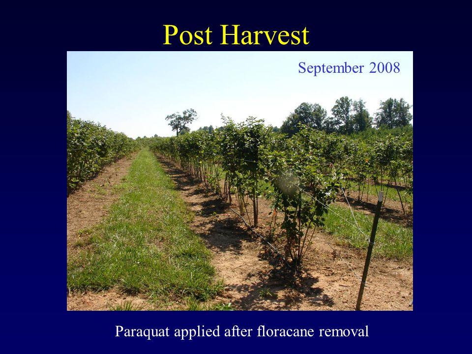 Post Harvest Paraquat applied after floracane removal September 2008