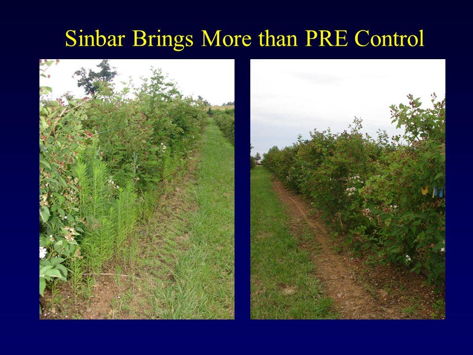 Sinbar Brings More than PRE Control