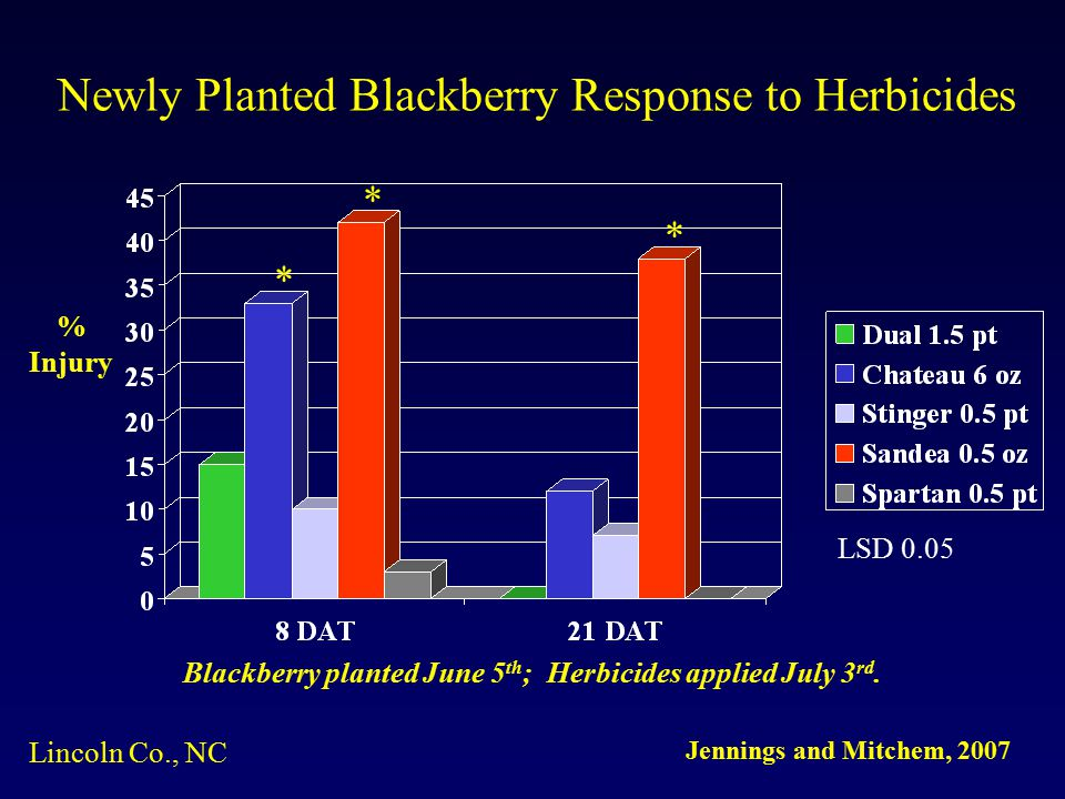 Newly Planted Blackberry Response to Herbicides * * * Blackberry planted June 5 th ; Herbicides applied July 3 rd.