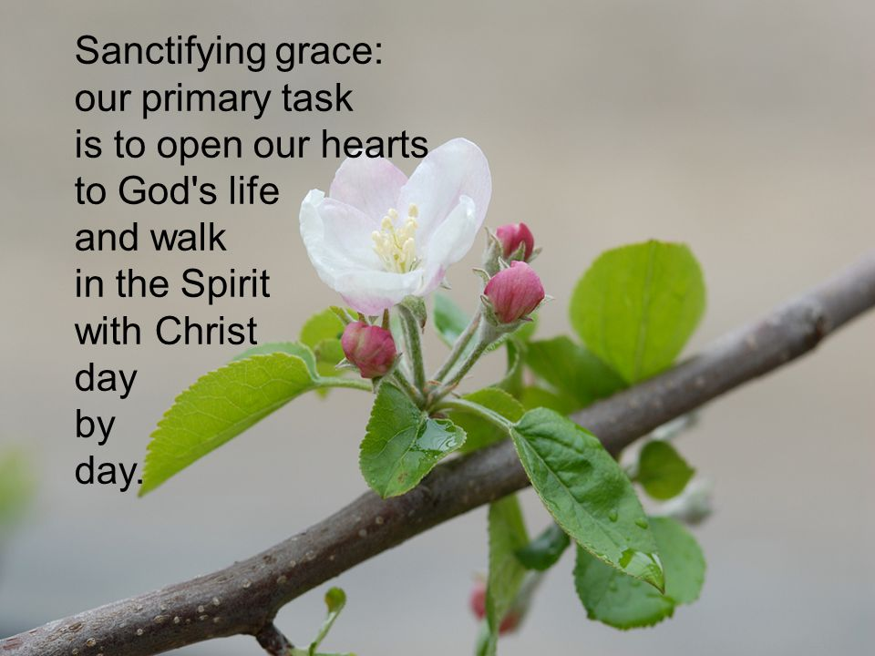 Sanctifying grace: our primary task is to open our hearts to God s life and walk in the Spirit with Christ day by day.